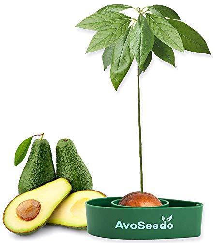 AvoSeedo das Besondere Garten Geschenke - Pflanzen...