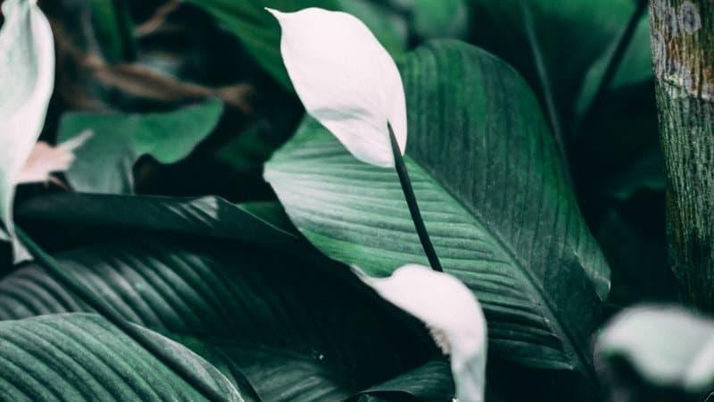 Pflanzen im Schlafzimmer - Diese Pflanzen dürfen nicht fehlen.