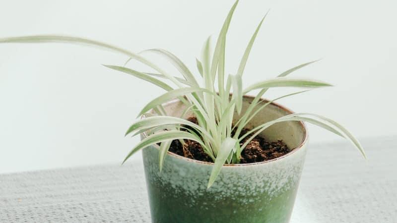 Pflanzen Im Schlafzimmer Diese Pflanzen Helfen Deinem Schlaf