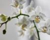 Orchideen sind auch gut für dein Feng Shui im Schlafzimmer