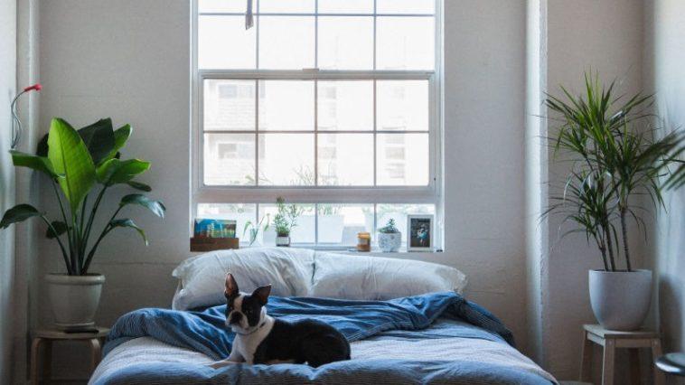 Pflanzen im Schlafzimmer: Diese Pflanzen helfen deinem Schlaf