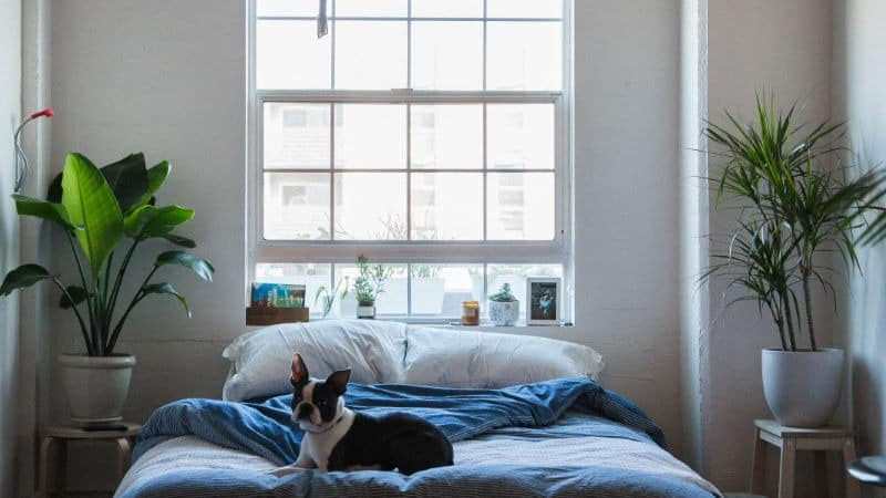 Pflanzen im Schlafzimmer: 14 beste Pflanzen für einen gesunden Schlaf