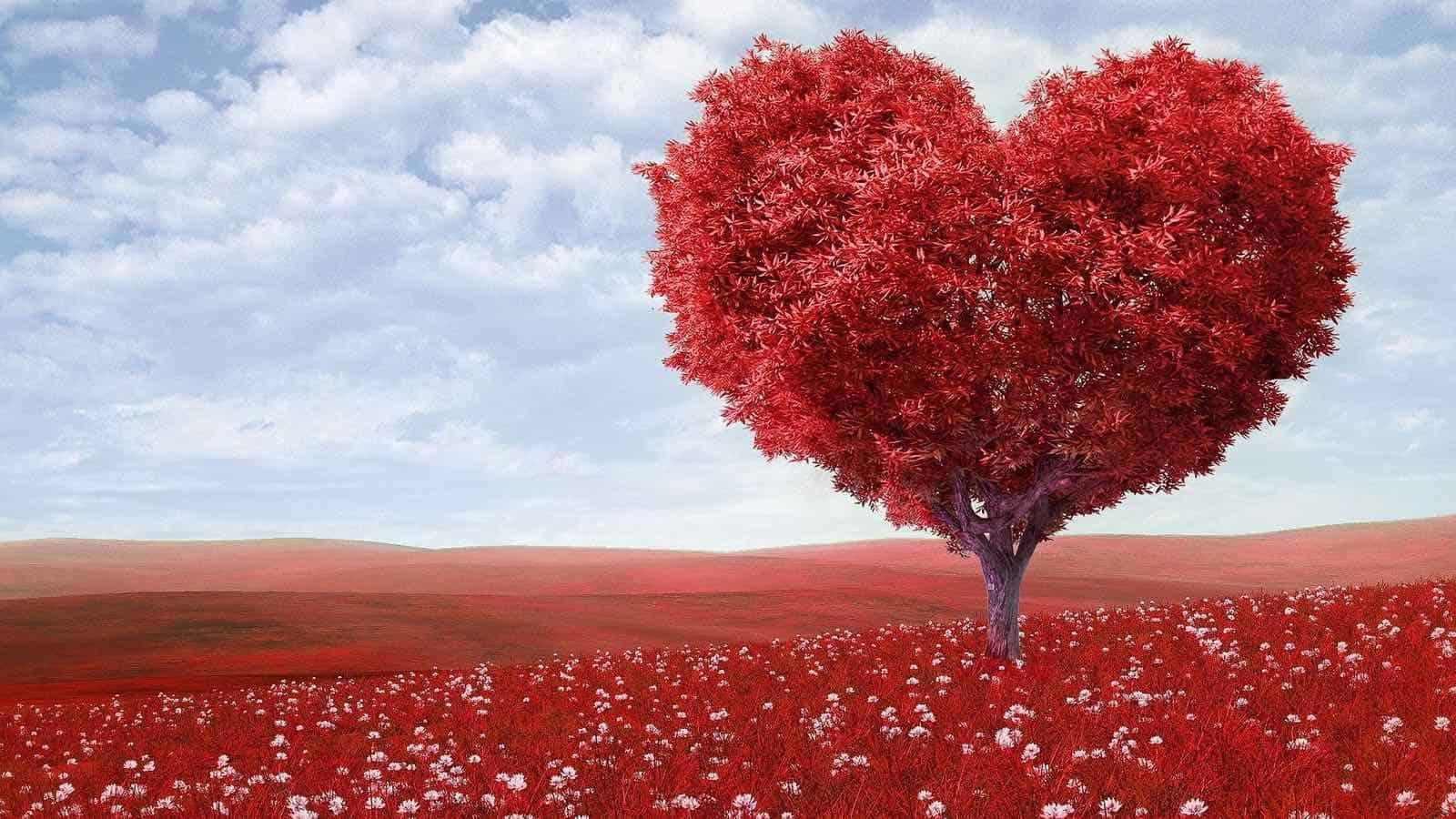 Ich Liebe Dich 300 Schöne Lustige Und Süße Liebessprüche