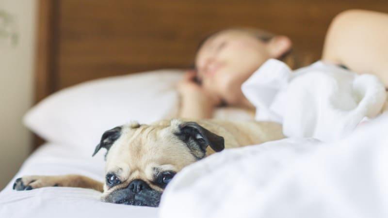 Mittagsschlaf- Besten Tipps für das perfekte Nickerchen