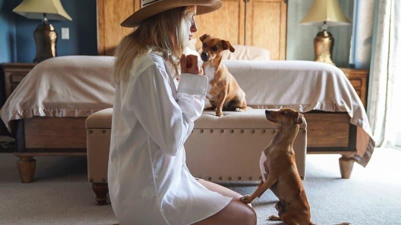 Hund im Schlafzimmer: Nachteile & Vorteile mit einem Hund im ...