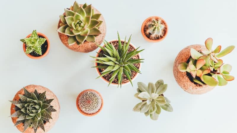 Zimmerpflanzen- 25 Pflanzen für's Haus und zur einfachen Pflege