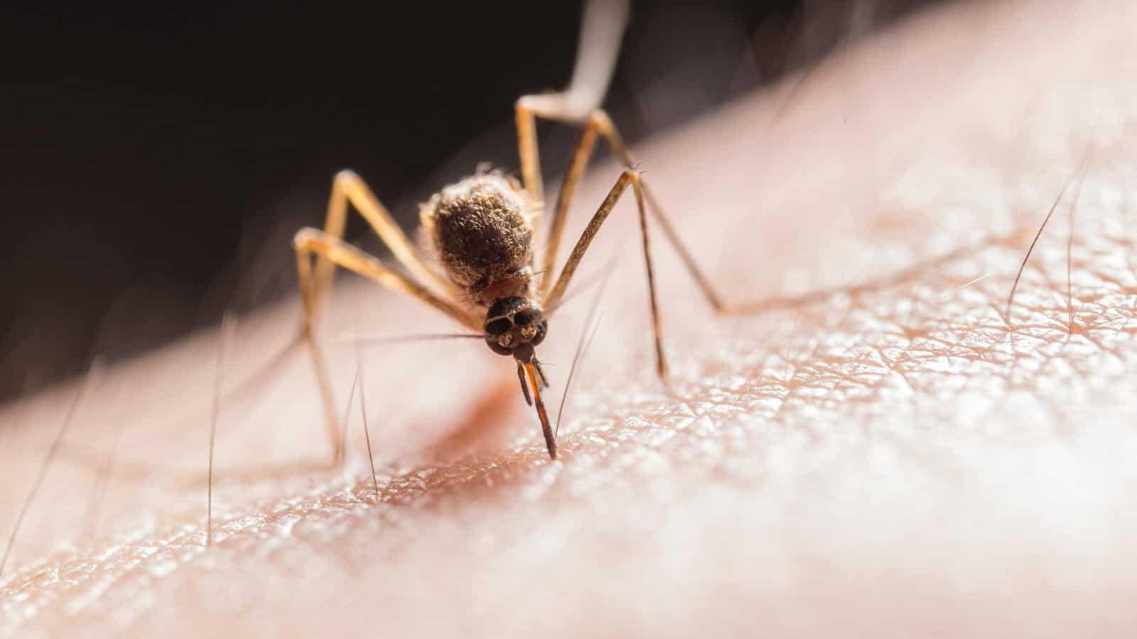 Mückenstich-Allergie- Was tun? Erfahre die Symptome und Tipps