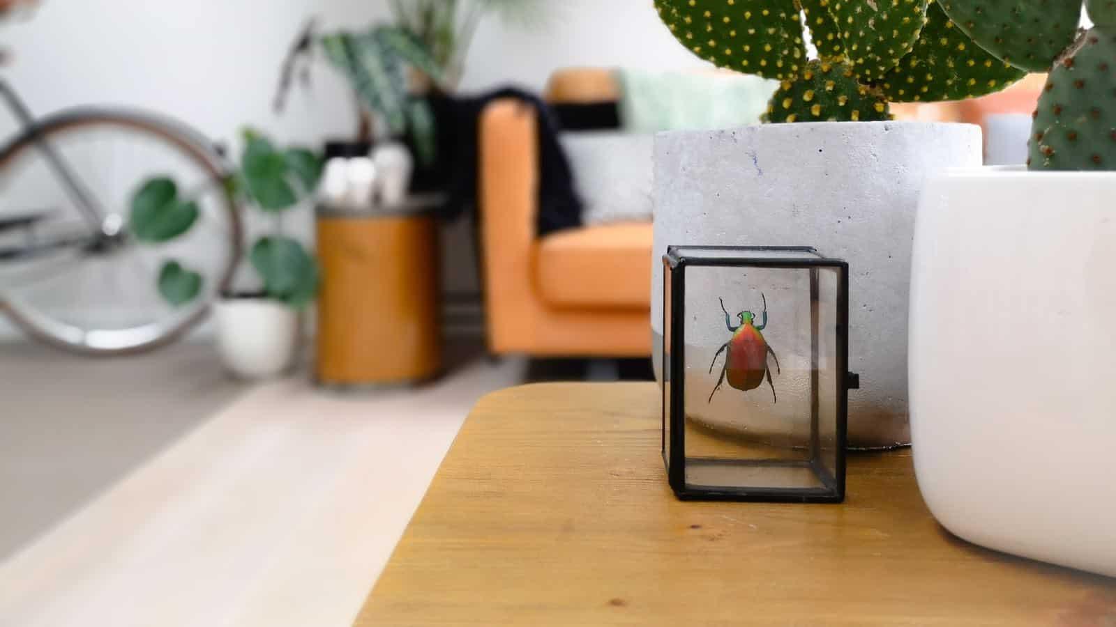 Käfer im Haus- 6 beste Tipps und Hausmittel für die Bekämpfung