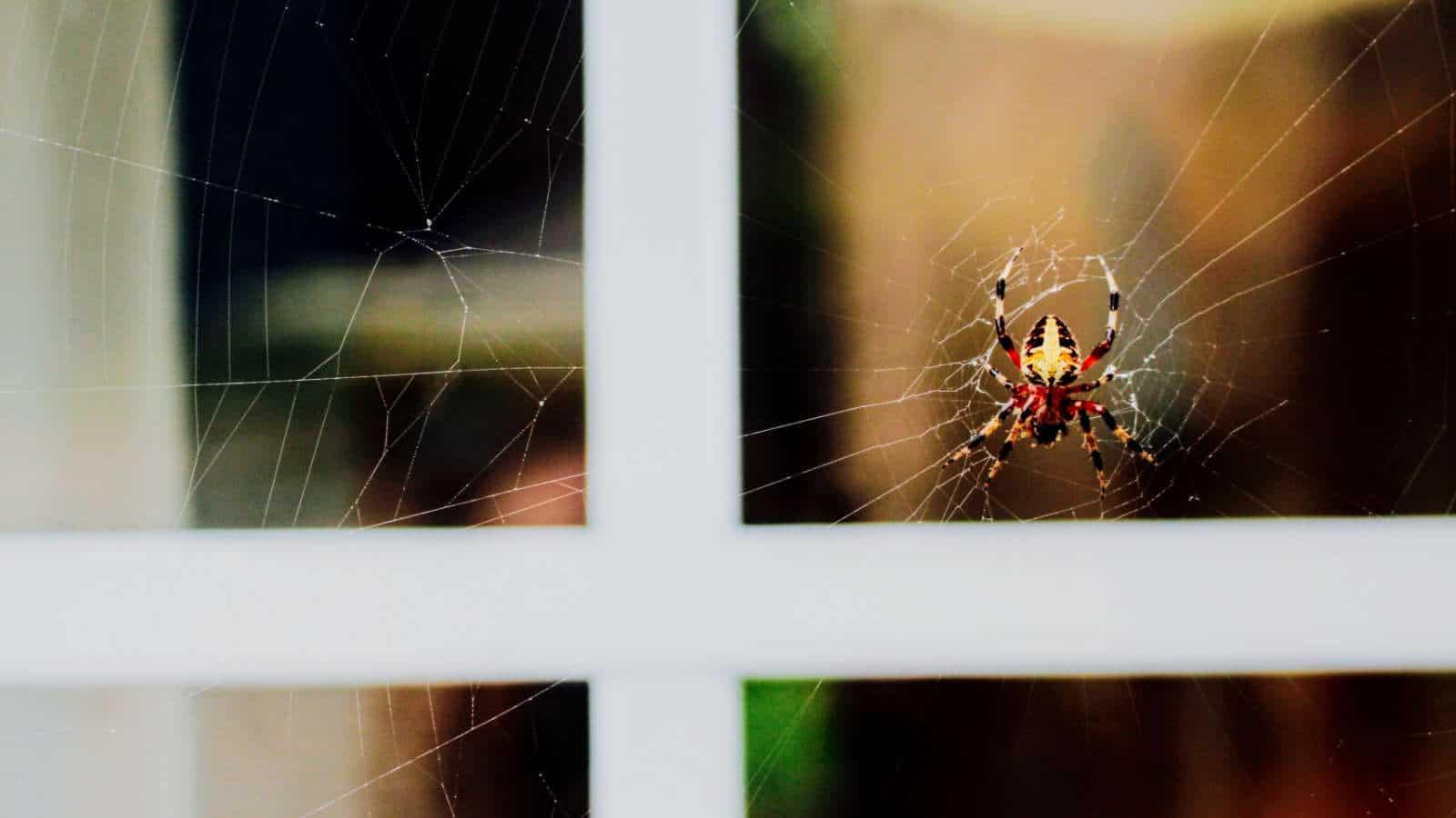 Spinnen vertreiben- Effektive Tipps und Hausmittel, die helfen