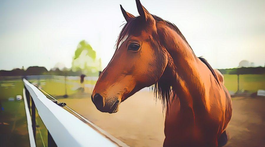 Traumdeutung Pferd. Was bedeutet das Traumsymbol und was heißt es, wenn ein Pferd im Traum erscheint.