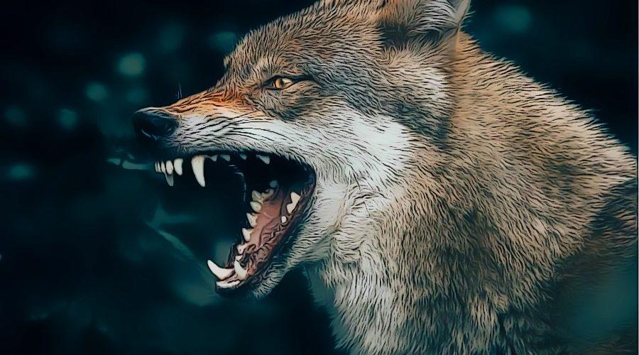 Was bedeutet die Traumdeutung Wolf und welche Traumsymbole beeinflussen dein Leben? Erfahre es hier!